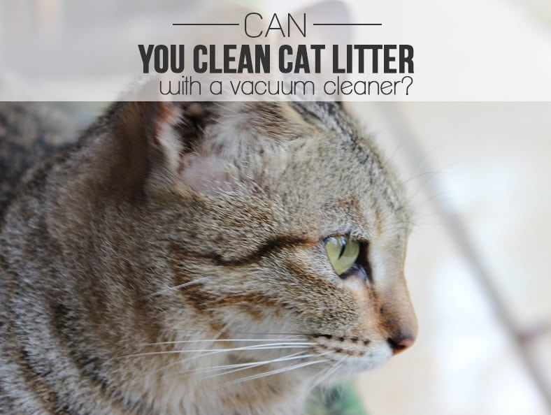 Can You Clean Cat Litter With a Vacuum Cleaner