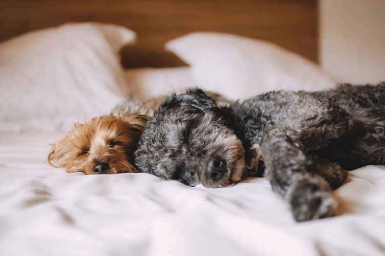 Dogs Sleeping On a Bed