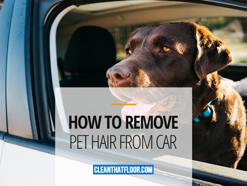 How To Remove Pet Hair From Car